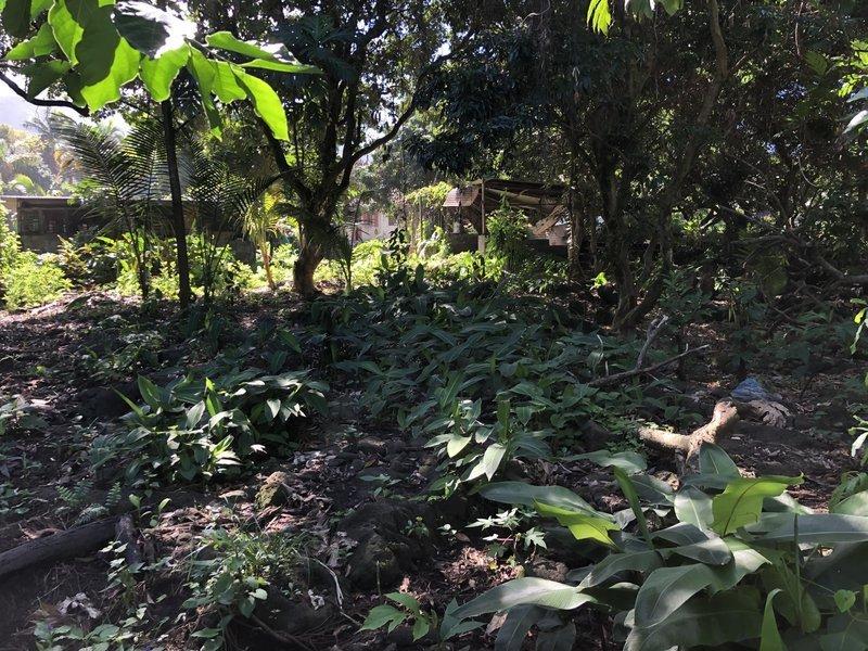 Terrain, 1 600 m² Saisi…