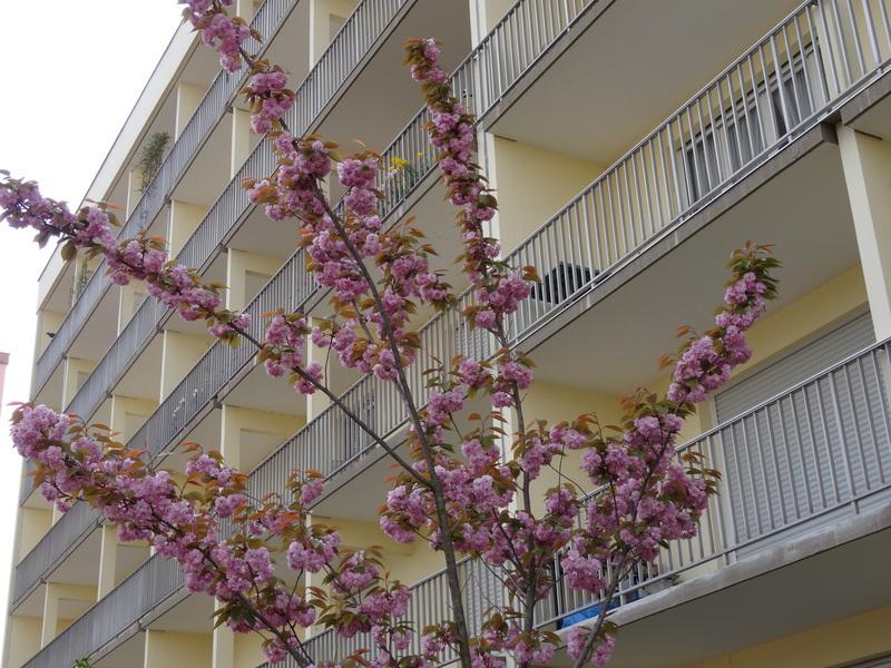 Appartement, 81 m² Stras…